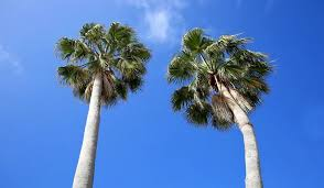 Palm Removal florida