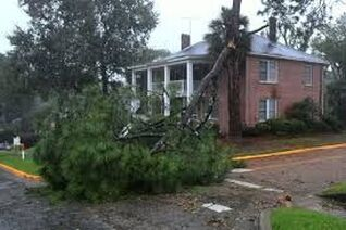 Tree removal Ormond Beach