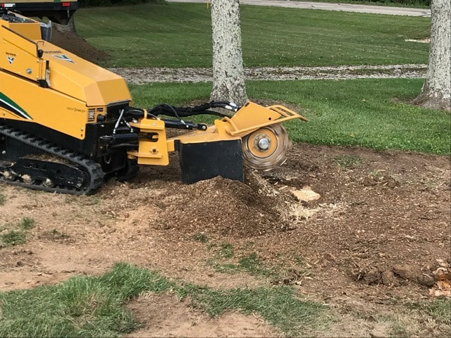 Stump grinding Volusia county